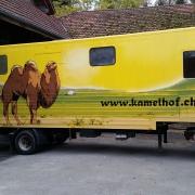 Kamelanhänger