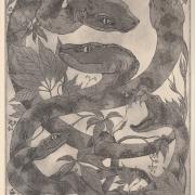 "Silke Jaspers Aquatinta ""Hydra"""